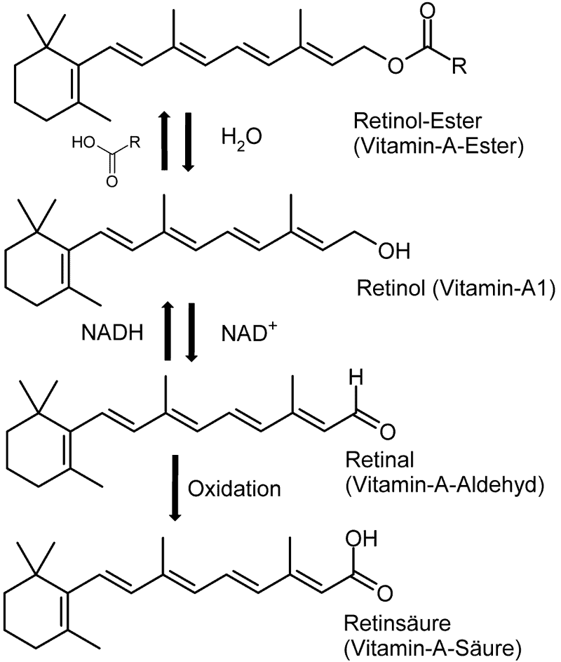 800px-Vitamin-A-Synthese Formen