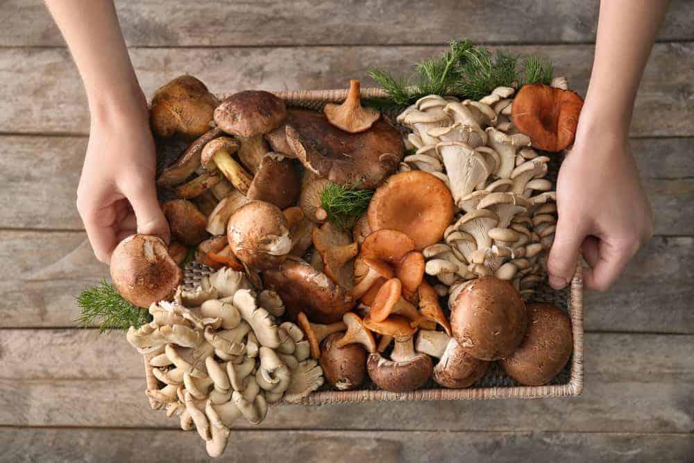 Abnehmen mit Vitalpilzen Frau mit Körbchen mit Pilzen in der Hand