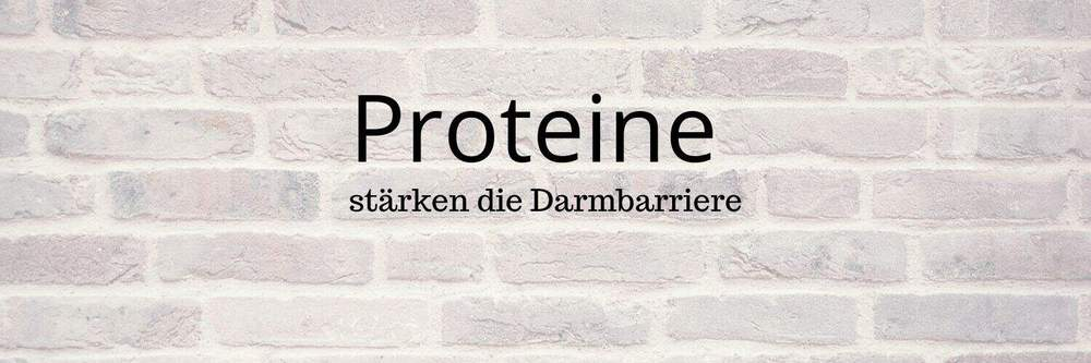 """Backsteinmauer mit Aufschrift """"Proteine"""""""