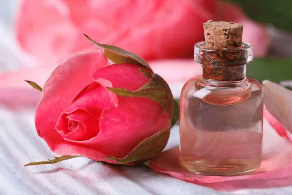 Rosenwasser Rose
