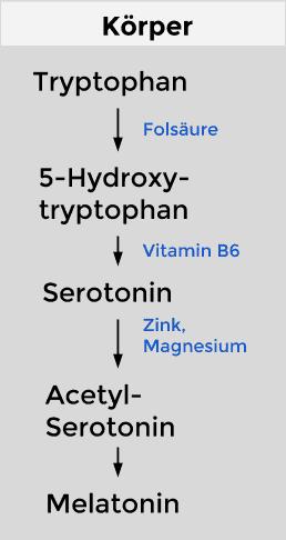 Tryptophan-Stoffwechsel