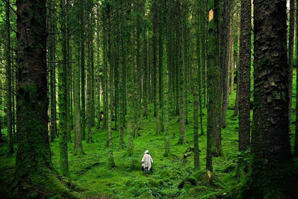 Waldbaden grüner Wald mit Bäumen und Moos