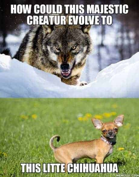 Wolf-Gentechnik nein Danke